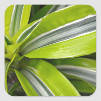 Striped green tropical leaves square sticker
