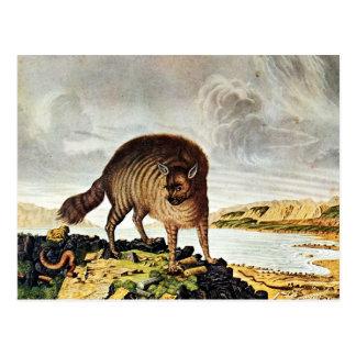 Striped Hyena Art (Aloys Zotl) Postcard