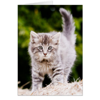Striped Kitten (in color) Greeting Card