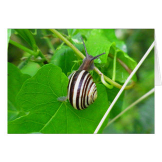 Striped Land Snail on a Green Leaf Blank Card