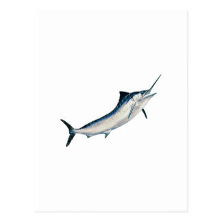 Striped Marlin Postcard