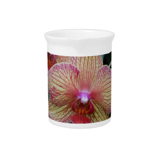 Striped Orchid Beverage Pitchers