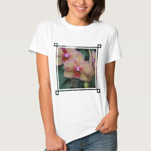 Striped Orchid T Shirt