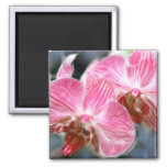 Striped Pink Phalaenopsis Orchids 2 Inch Square Magnet