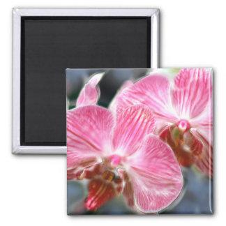 Striped Pink Phalaenopsis Orchids Fridge Magnets