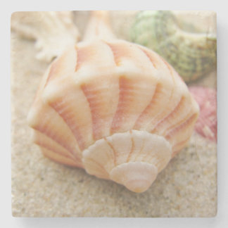 Striped Sea Shell Lightning Whelk Stone Beverage Coaster