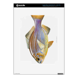 Striped Seaperch Decal For iPad 3
