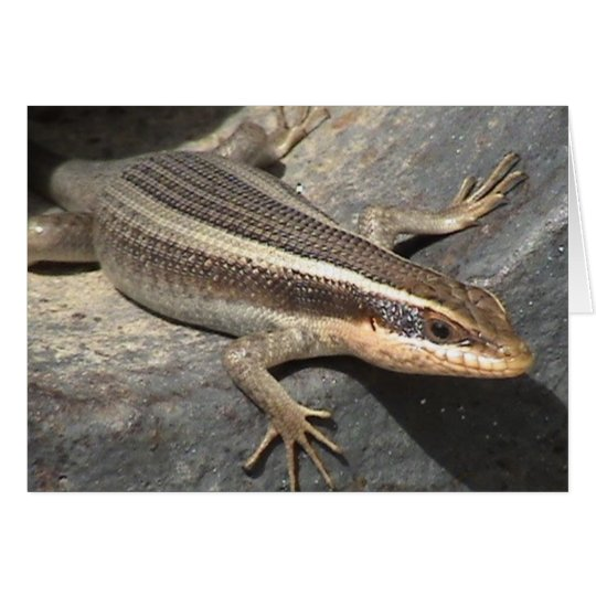 Striped Skink in a Canon Card