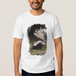 Striped Skunk, Mephitis mephitis, adult at T-shirts