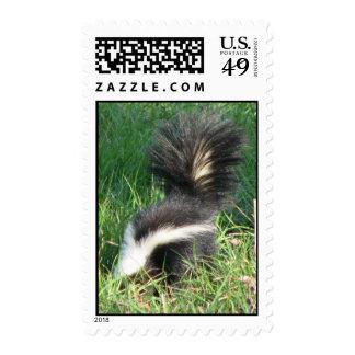 Striped Skunk Postage