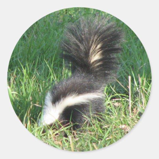Striped Skunk Sticker