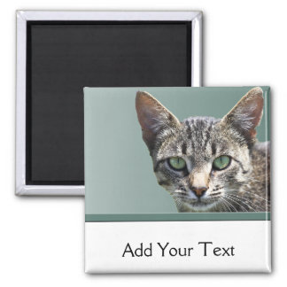 Striped Tabby with Green Eyes 2 Inch Square Magnet