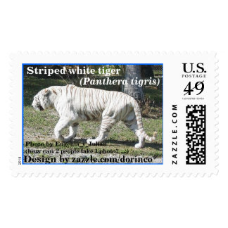 Striped White Tiger 1 Postage Stamp