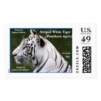 Striped White Tiger 2 Blue Postage