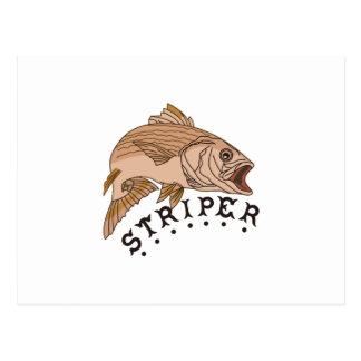 Striper Postcard