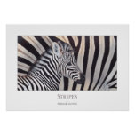 Stripes Zebra Baby and Mom poster all sizes