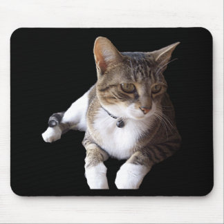 Stripped Cat Laying on Mouse Pad