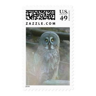 Strix Nebulosa Lapponi Postage Stamp
