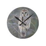 Strix Varia del búho barrado Reloj