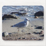 Strolling Gull Mouse Mats