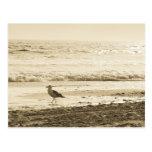 Strolling Seagull Postcard