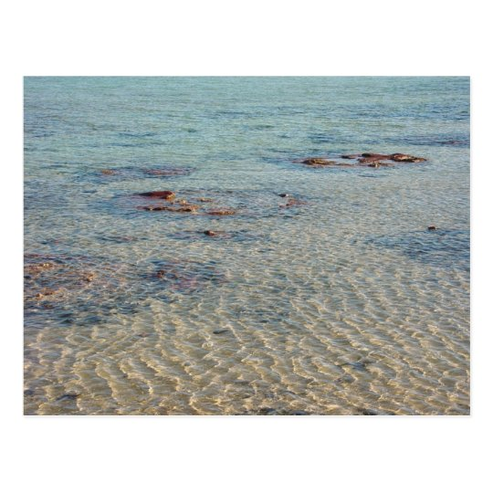 Stromatolites At Shark Bay Postcard
