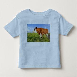 Strong Friesian cow T Shirts