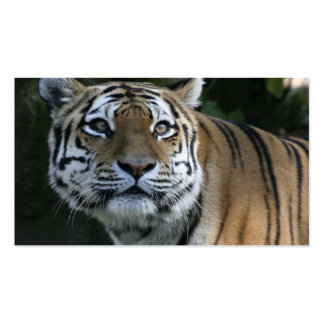 Strong TIGER 2 Double-Sided Standard Business Cards (Pack Of 100)