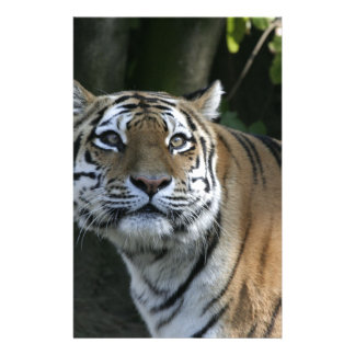 Strong TIGER 2 Customized Stationery
