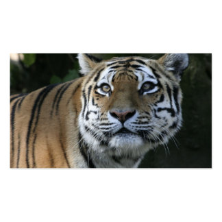 Strong TIGER Double-Sided Standard Business Cards (Pack Of 100)