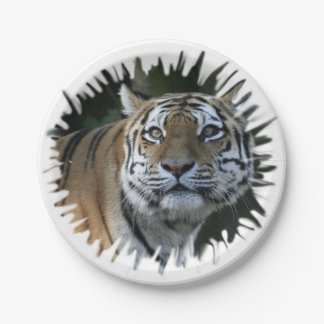 strong tiger paper plate