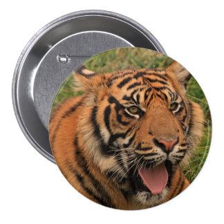 Strong Tiger Pinback Button