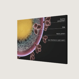 Structure of a HIV cell Canvas Print