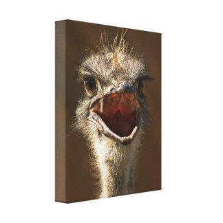 Struthio camelus impresión en tela