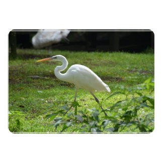 Strutting Egret 5x7 Paper Invitation Card