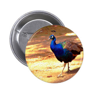 Strutting Peacock .jpg 2 Inch Round Button