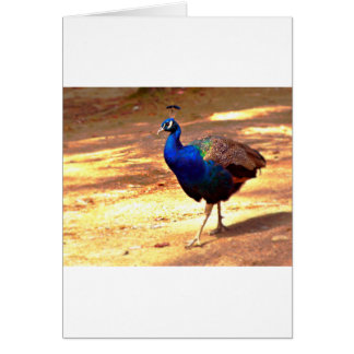 Strutting Peacock .jpg Card