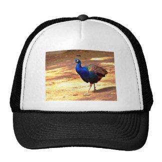 Strutting Peacock .jpg Trucker Hat
