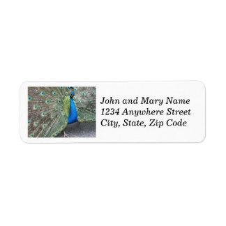 Strutting Peacock Photo Return Address Labels