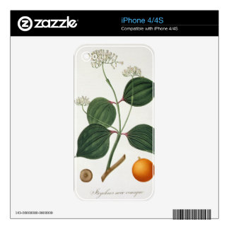 Strychnos nux vomica from 'Phytographie Medicale' Decals For iPhone 4S