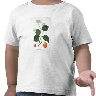 Strychnos nux vomica from 'Phytographie Medicale' T-shirts