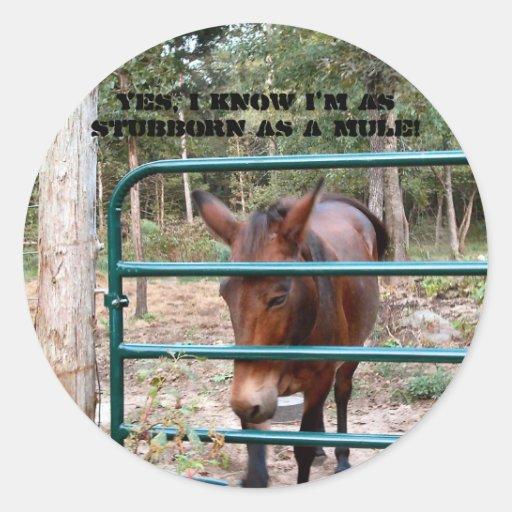 Stubborn as a mule round sticker