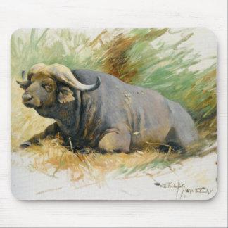 Studie Eines Kafferbuffels Alfombrilla De Ratón