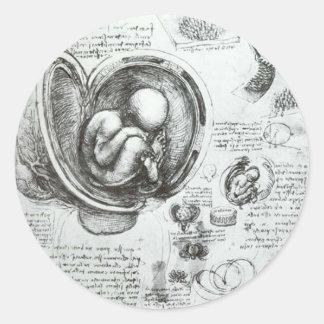 Studies of embryos classic round sticker