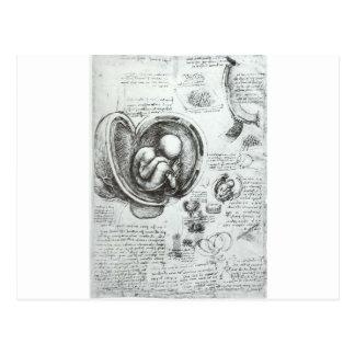 Studies of embryos postcard