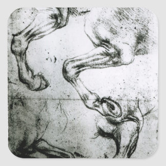 Studies of Horses legs Square Sticker