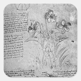 Studies of Violas Square Sticker