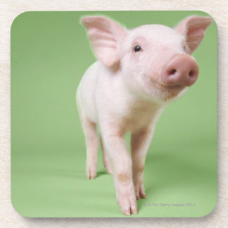 Studio Cut Out of a Piglet Standing Beverage Coaster