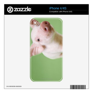 Studio Cut Out of a Piglet Standing Decal For iPhone 4