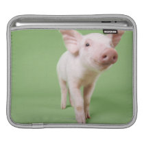 Studio Cut Out of a Piglet Standing Sleeve For iPads
